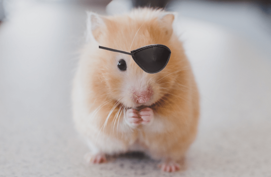 Hamster with eyepatch